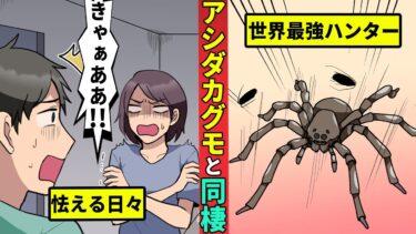 【ミステリー調査団】世界最強のゴキブリハンター!「アシダカグモ」と暮すとどうなるのか?【漫画動画】